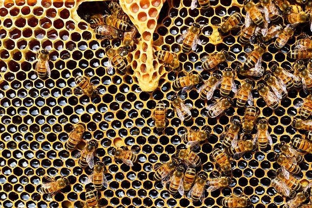 Co všechno produkují včely?