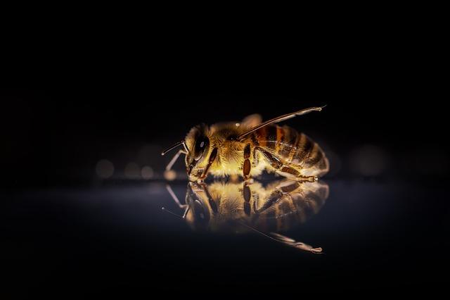 živá včela