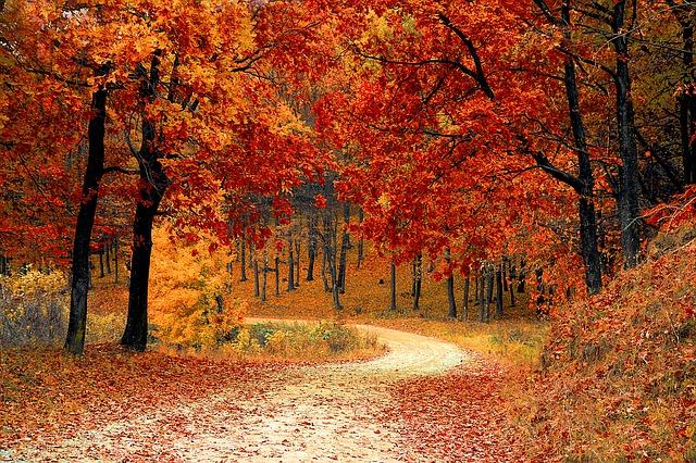Barvy podzimu 2019