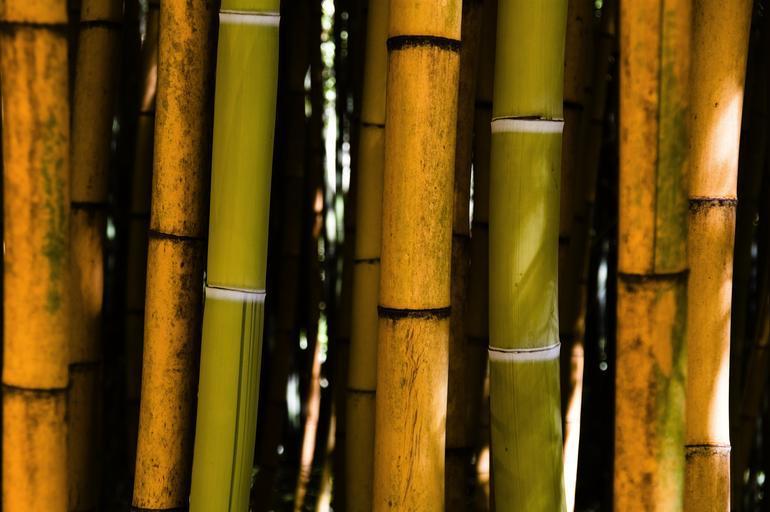 bambusová stébla